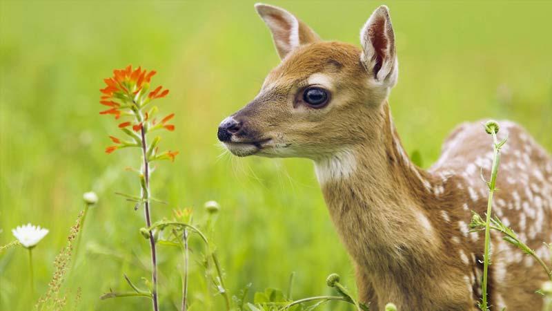 Test Qué Animal Eres Según Tu Personalidad